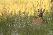 stock photo of bucks  - The buck deer in the wild - JPG