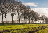 Rows Of Bare Trees