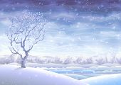 picture of winter landscape  - Snowy rolling winter landscape and a small tree in the foreground - JPG