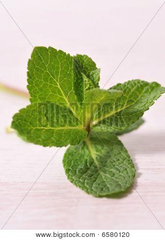 leaf mint