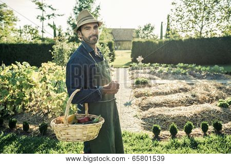 Worker with basket of organic vegetables, picked up from a synergistic vegetable garden