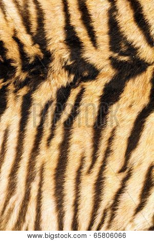 Stripes On Tiger Back