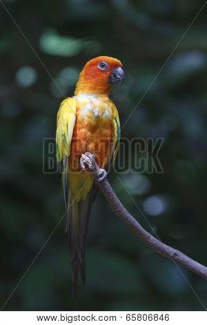 Parrot lovebird parakeet bird