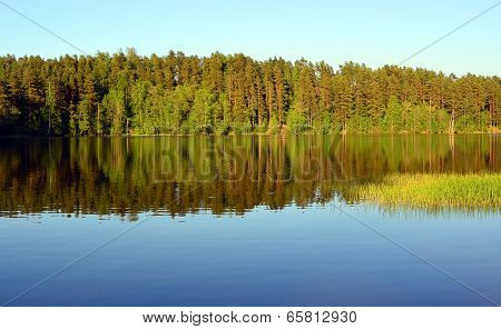 Forest Lake Landscape