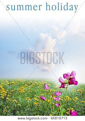 summery meadow