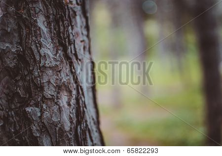Forest tree
