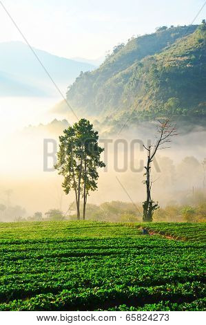 Morning Fog In Doi Angkhang Mountain. Chiang Mai, Thailand. .