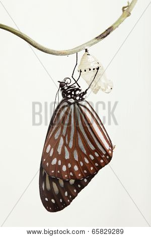Butterfly Change Form Chrysalis
