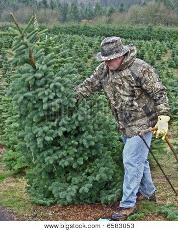 Man falling Christmas tree