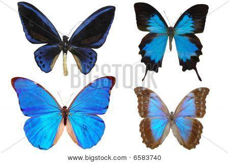 Several Butterflies