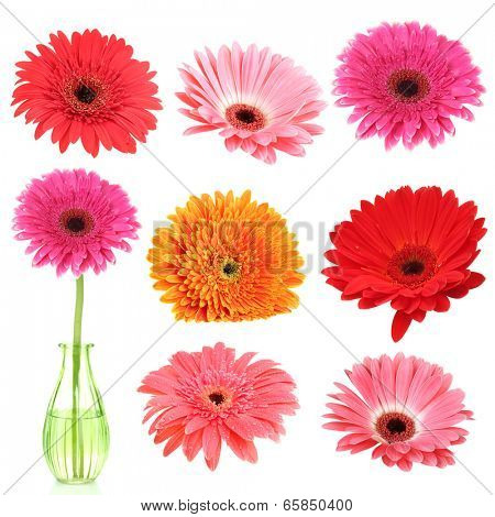 Collage of beautiful gerbera flowers isolated on white