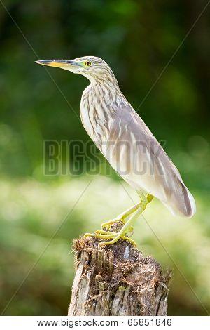 The Bird In The Kerala Backwaters Jungle
