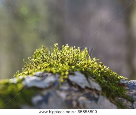old tree bark with moss on it