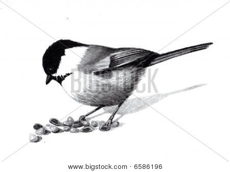Pencil Drawing of a Chickadee