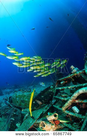 Tropical fish under the sea