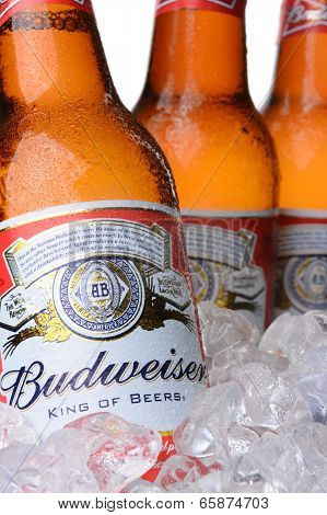 Closeup Of Budweiser Beer Bottles