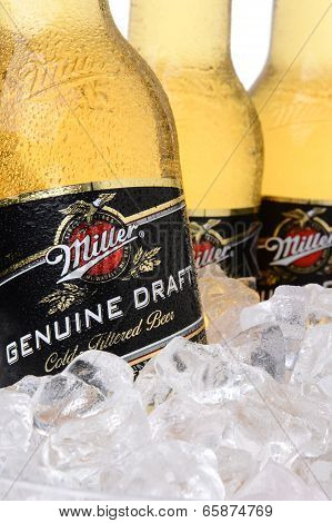 Closeup Of Miller Genuine Draft Beer Bottles