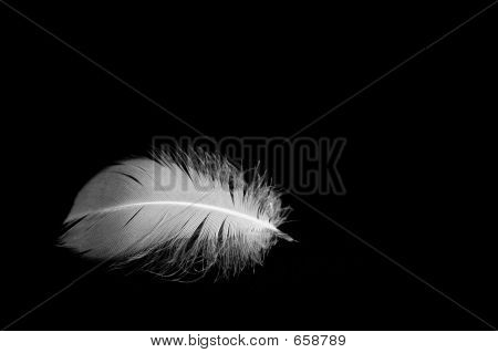 Feather In Black Background
