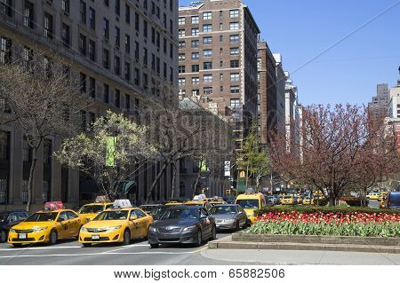 Spring flowers blooming at Park Avenue in Manhattan
