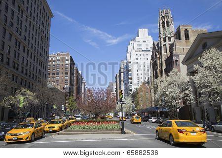 Spring flowers blooming at Park Avenue in Manhattan
