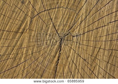 Radial Cracks