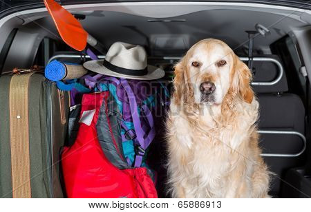 Golden Retriever Trip
