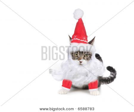 Humbug Santa Kitten Glaring At The Viewer