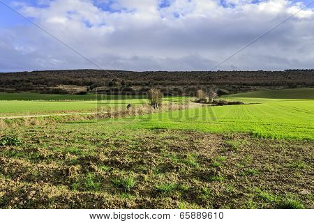 green fields under blue sky near the hill in Navarre