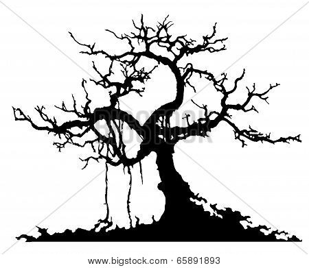 mystery tree