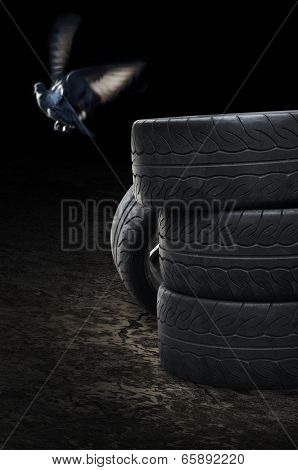 Heap Of Old Tires With Bird