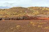 pic of petrified  - Petrified Log in Petrified Forest National Park in Arizona - JPG