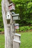 stock photo of nesting box  - Nesting boxes on tree - JPG