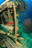 stock photo of grouper  - Grouper glassfish and other tropical fish around a manmade piece of wreckage - JPG