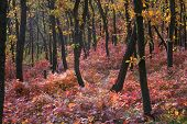 picture of dnepropetrovsk  - Majestic autumn forest of the Dnepropetrovsk - JPG
