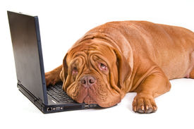 image of funny animals  - An experienced staff is tired of working - JPG