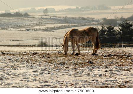 Winter Pasture.