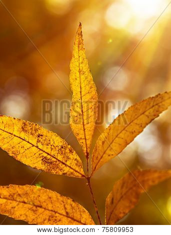 Beautiful autumn leaves on twig in bright sun rays, warm autumnal sunny day, dry tree in the park, beauty of fall nature