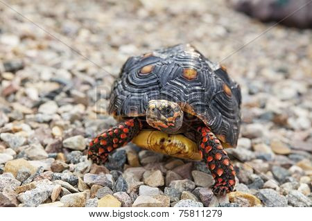 Tortoise Outside