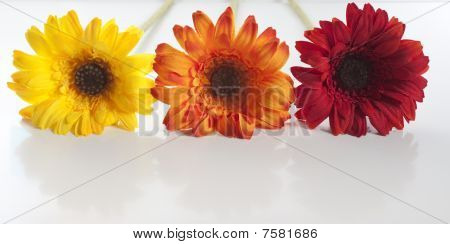 Artificial Flowers Lined Up