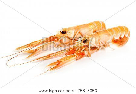 Langoustines on white background