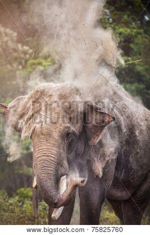 Elephant In Nepal