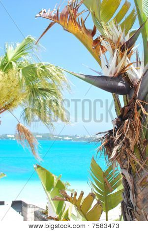 palm tree by beach