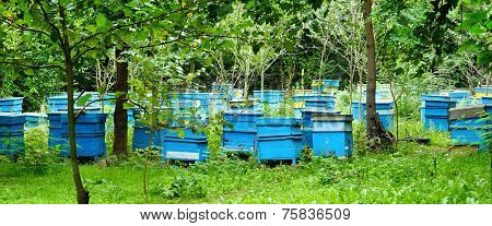 Honey Bee Hives Between Trees