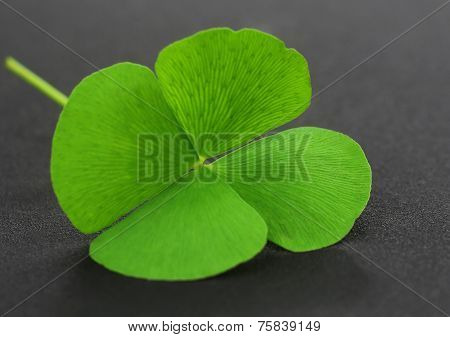 Clover Leaf On Gray Surface