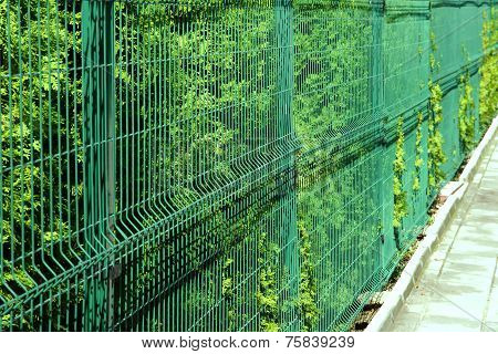 Rigid Mesh Fencing Panels