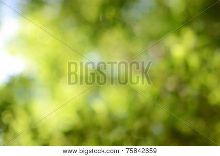Green nature blurred background