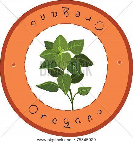 Fresh Oregano