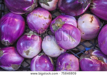 Aubergine Vegetable