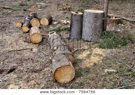 Pile Of Coniferous Firewood