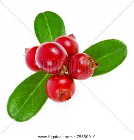 cranberries cowberries heap close up macro shot  isolated on white background